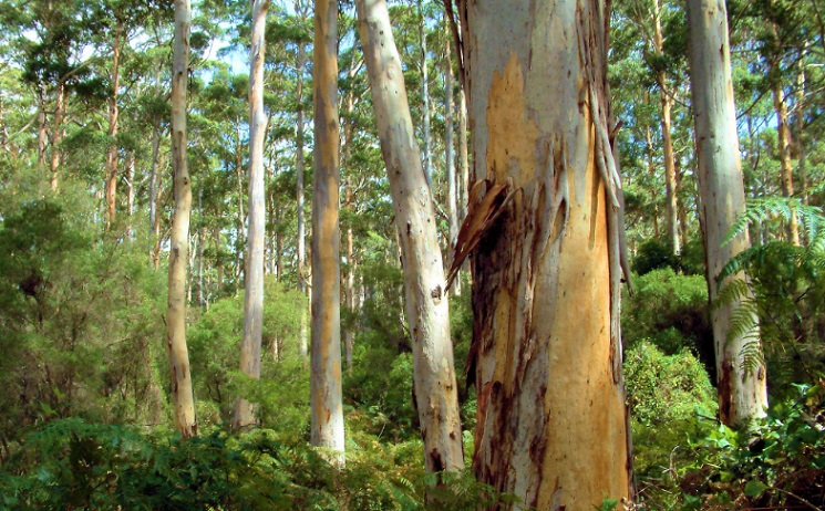 AUSTRALIAN OUTBACK TIMBER, FROM ANAKIE, VICTORIA