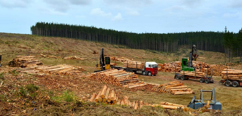 ZINDIA GROUP NEW ZEALAND: EXPORT WOOD PINE LOGS